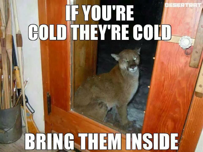 if-youre-cold-theyre-cold.jpg.cf4a4dc4954eff9f02a2e7463a460e14.jpg